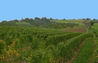 vigne du vin paill�